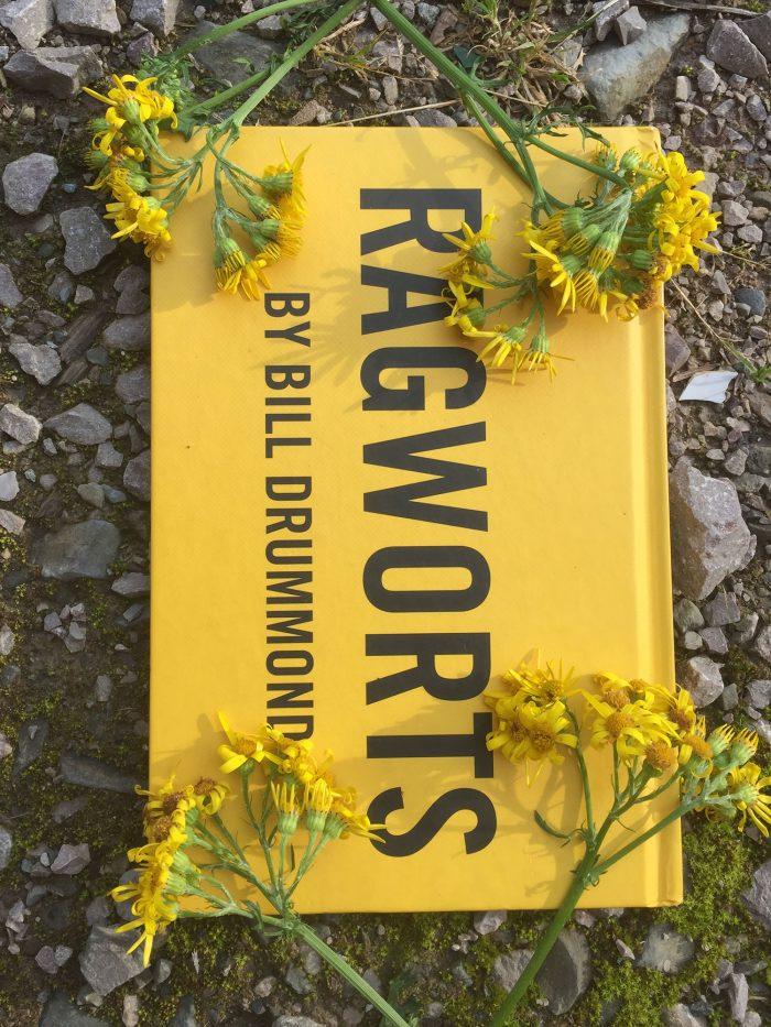Ragworts front cover